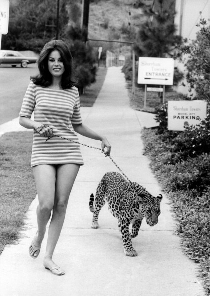 Lana Wood keeping a leopard on a lead